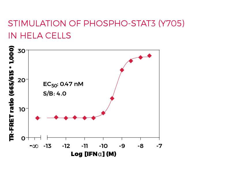 Stimulation of Phospho-STAT3 (Y705) in HeLa cells