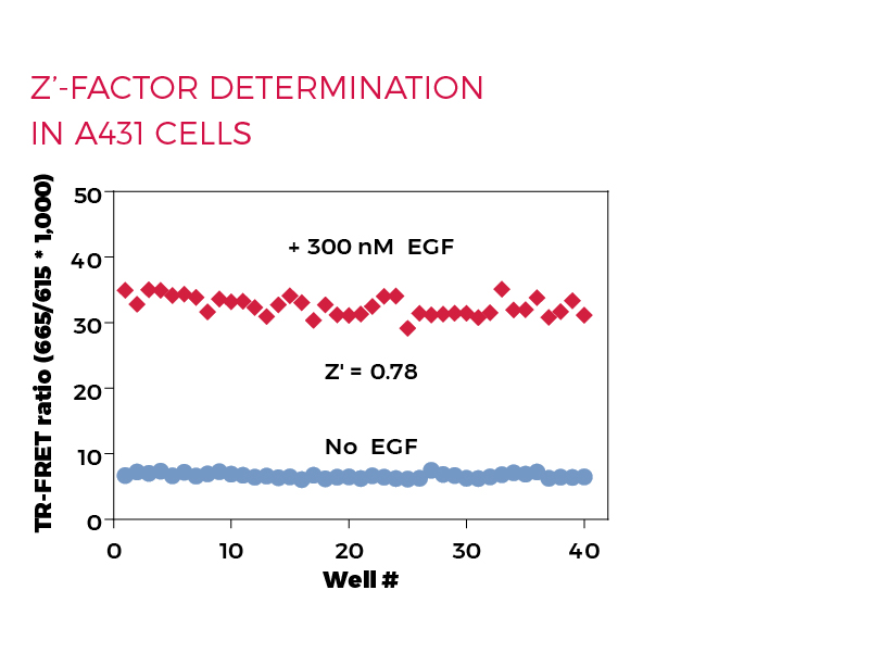 Z'-factor determination in A431 cells