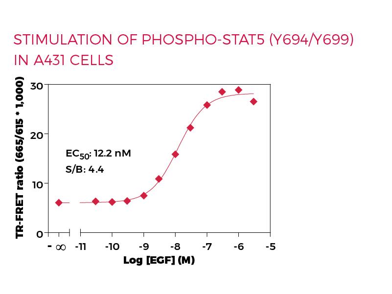 Stimulation of Phospho-STAT5 (Y694/Y699) in  A431 cells