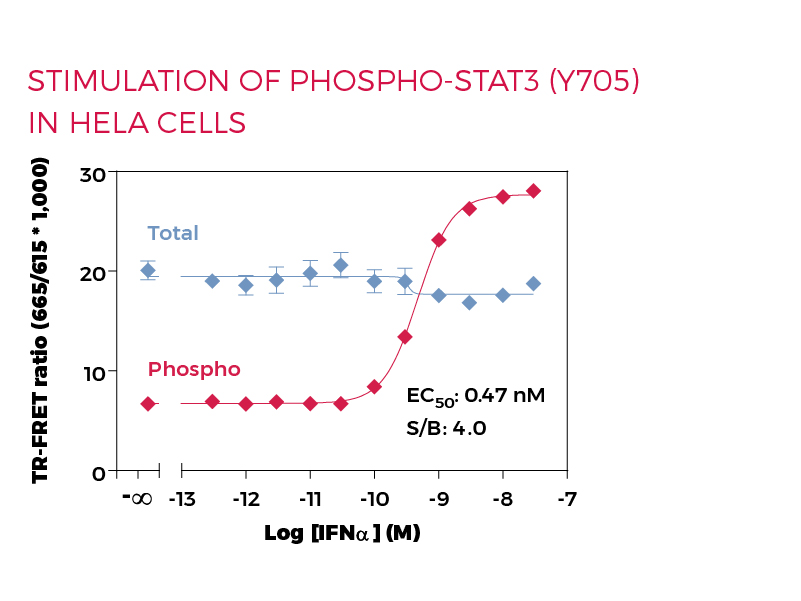 Stimulation of Phospho-STAT3 (Y705) in HeLa cells