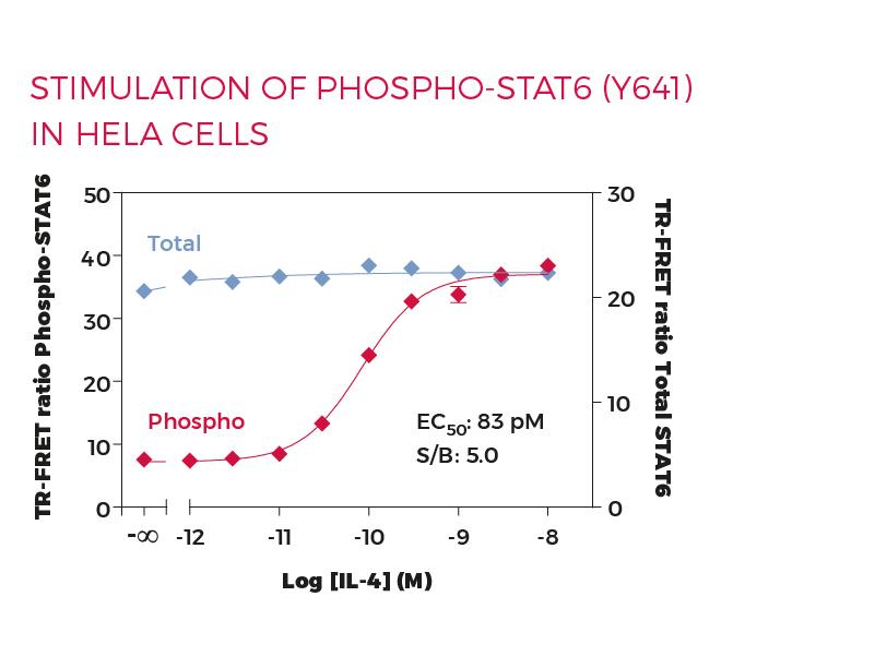 Stimulation of Phospho-STAT6 (Y641) in HeLa cells