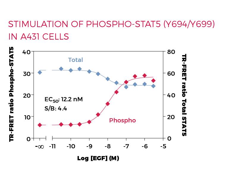 Stimulation of Phospho-STAT5 (Y694/699) in A431 cells