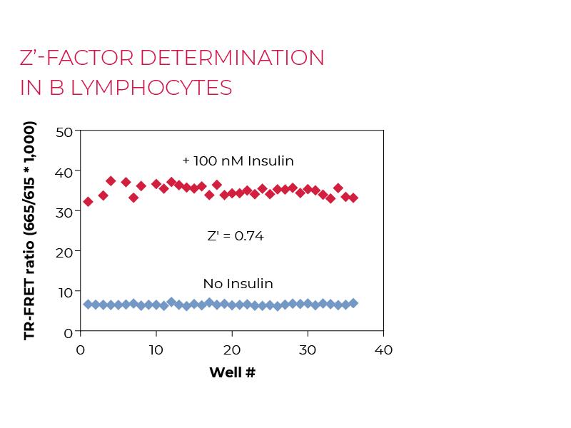 Z'-factor determinationin B lymphocytes