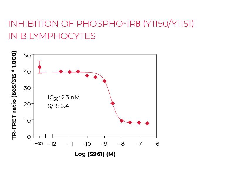 Inhibition of Phospho-IRB (Y1150/Y1151) in B lymphocytes
