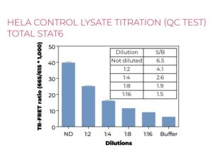 HeLa control lysate titration Total STAT6