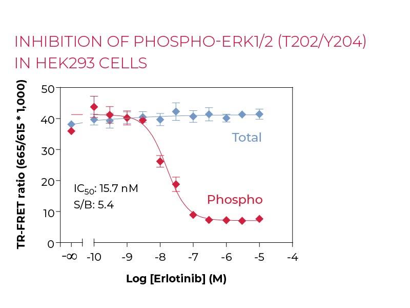 Inhibition of PHOSPHO-ERK1-2 (T202-Y204) in HEK293 cells