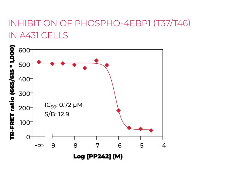 Inhibition of Phospho 4EBP1 (T37-T46)in A431 cells
