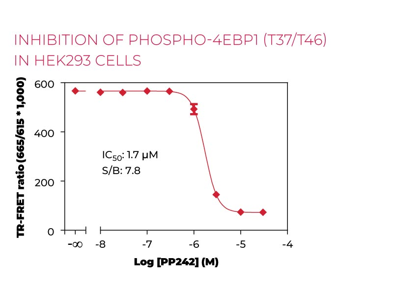 Inhibition of Phospho 4EBP1 (T37-T46) in HEK293 cells