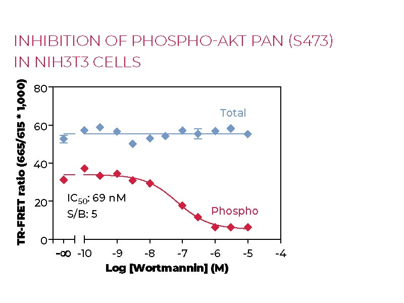Inhibition of Phospho-AKT pan (S473) in NIH3T cells