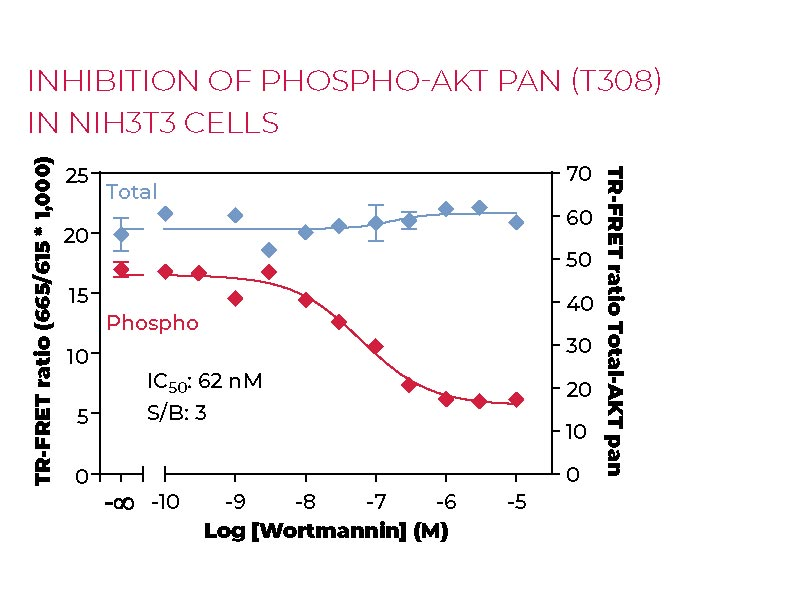 Inhibition of Phospho-AKT pan (T308) in NIH3T3 cells