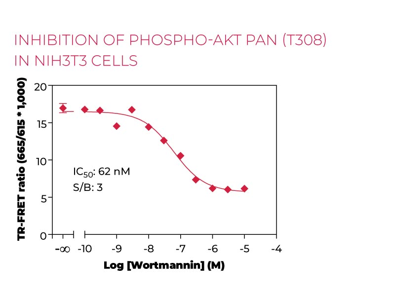 Inhibition of Phospho-AKTpan(T308) in NIH3T3 cells