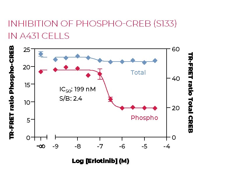 Inhibition of Phospho CREB (S133) in A431 cells