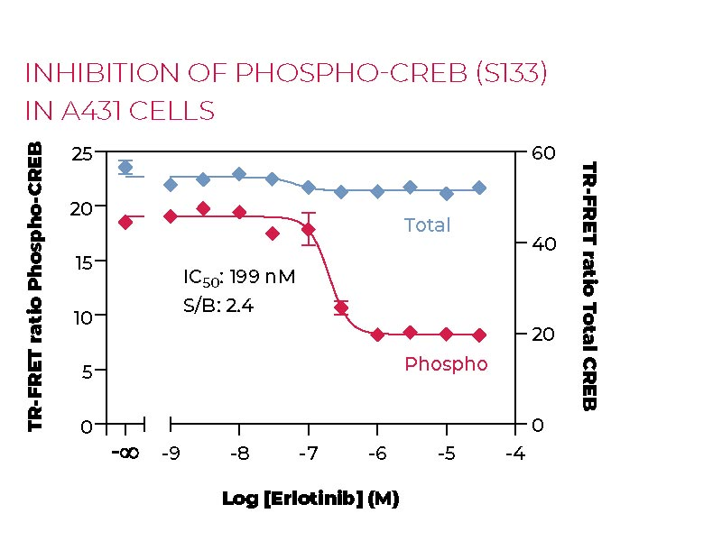 Inhibition of Phospho-CREB (S133) in A431 cells
