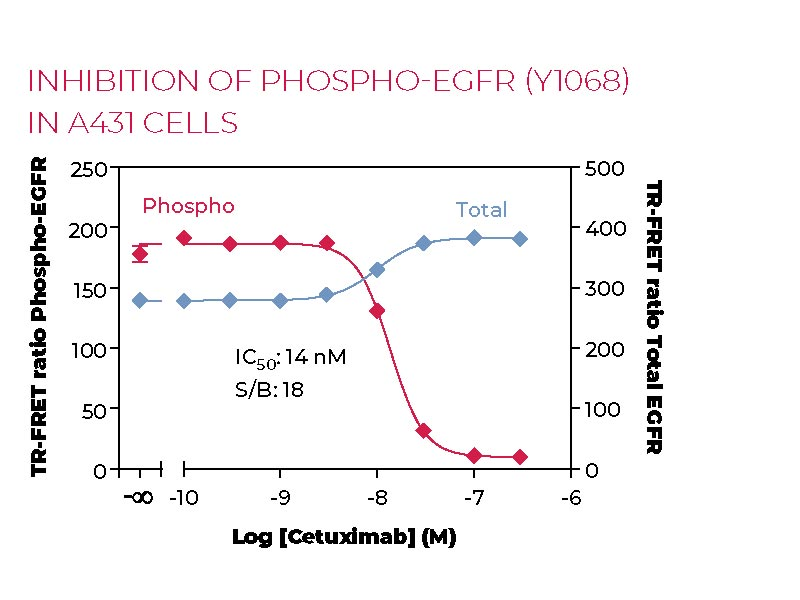 Inhibition of Phospho-EGFR (Y1068) in A431 cells