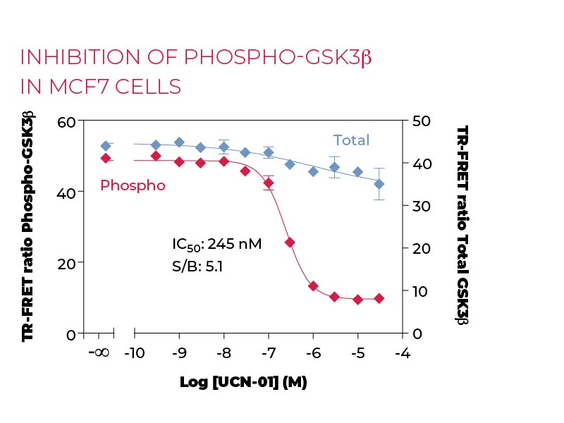 Inhibition of Phospho-GSK3β in MCF7 cells