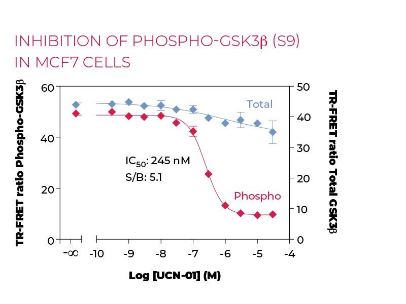 Inhibition of Phospho-GSK3β (S9) in MCF7 cells
