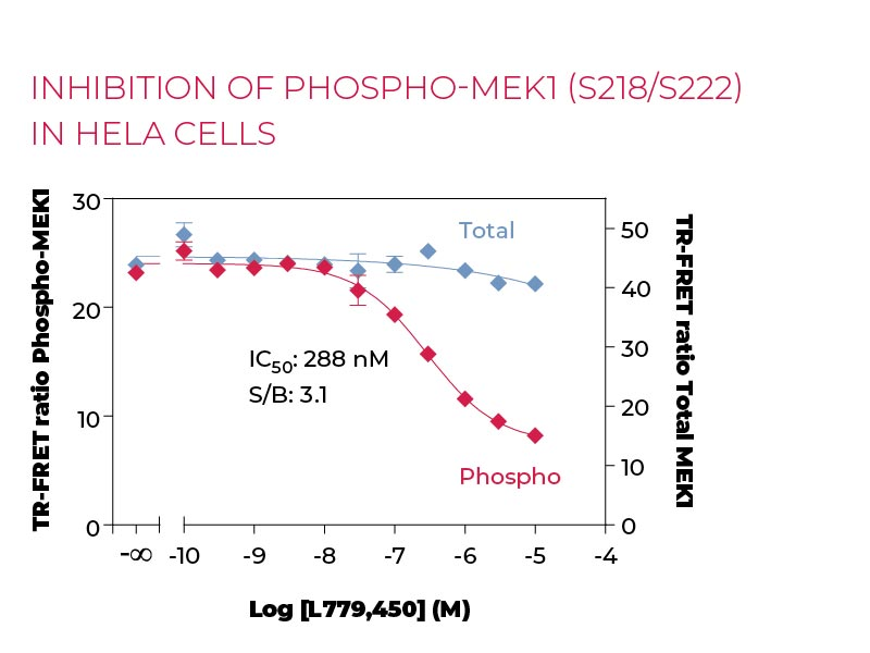 Inhibition of Phospho-MEK1 (S218-S222) in HeLa cells