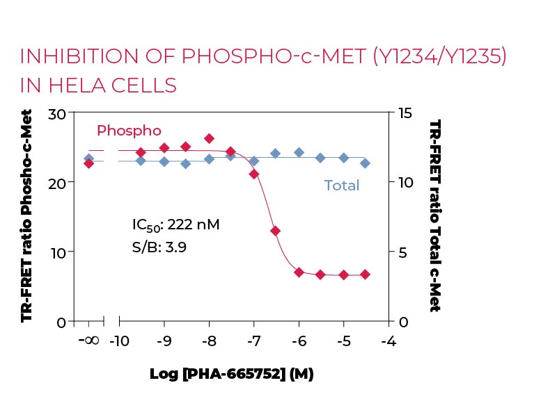 Inhibition of Phospho c-Met (Y1234-Y1235) in Hela cells