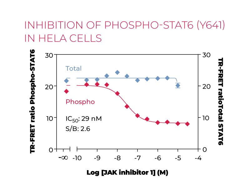 Inhibition of Phospho-STAT6 (Y641) in Hela cells