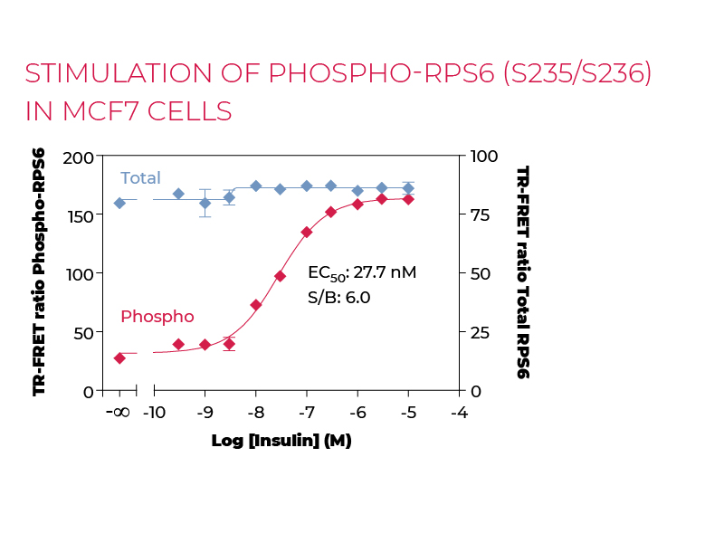 Stimulation of Phospho-RPS6 (S235/S236) in MCF7 cells