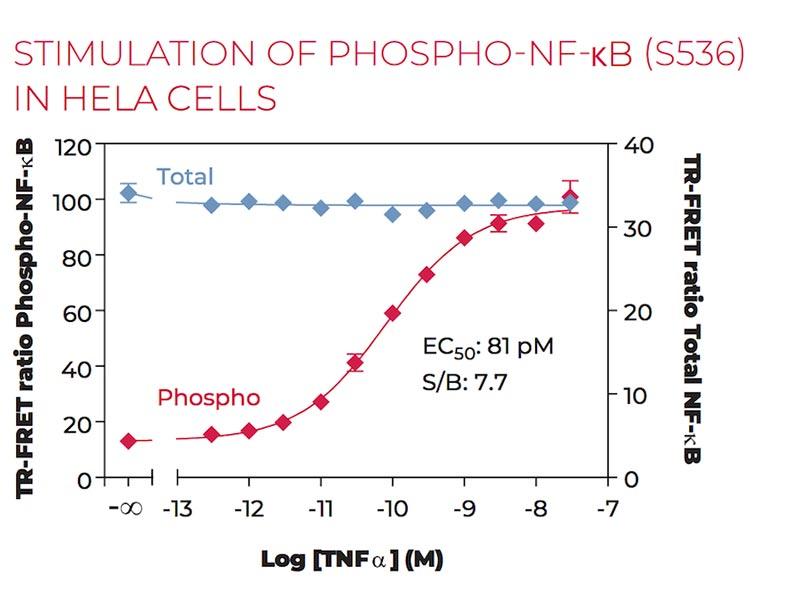 Stimulation of Phospho-NF-kB (S536) in HeLa cells