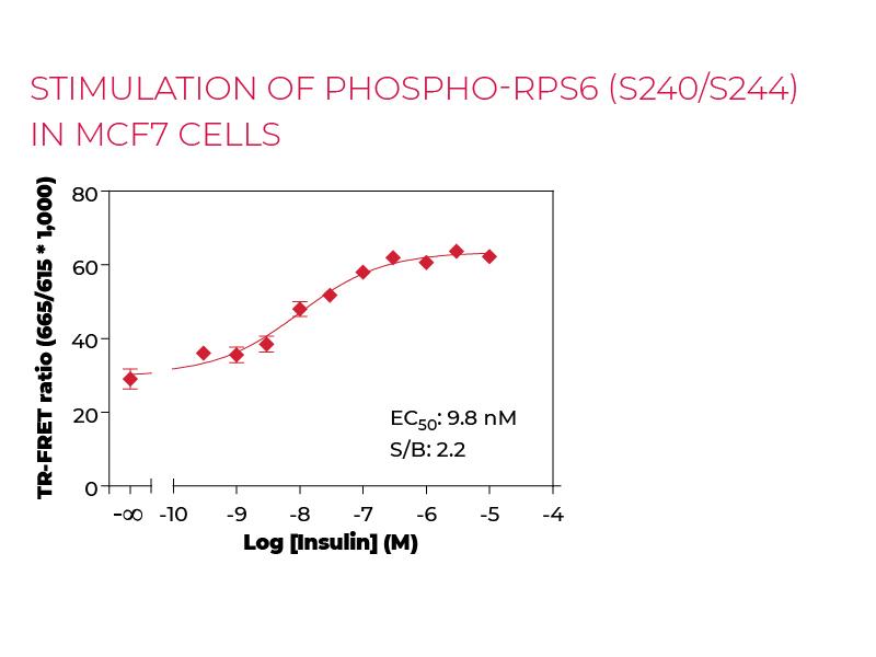 Stimulation of Phospho-RPS6 (S240/S244) in MCF7 cells