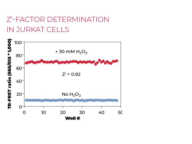 Z'-factor determination in Jurkat cells