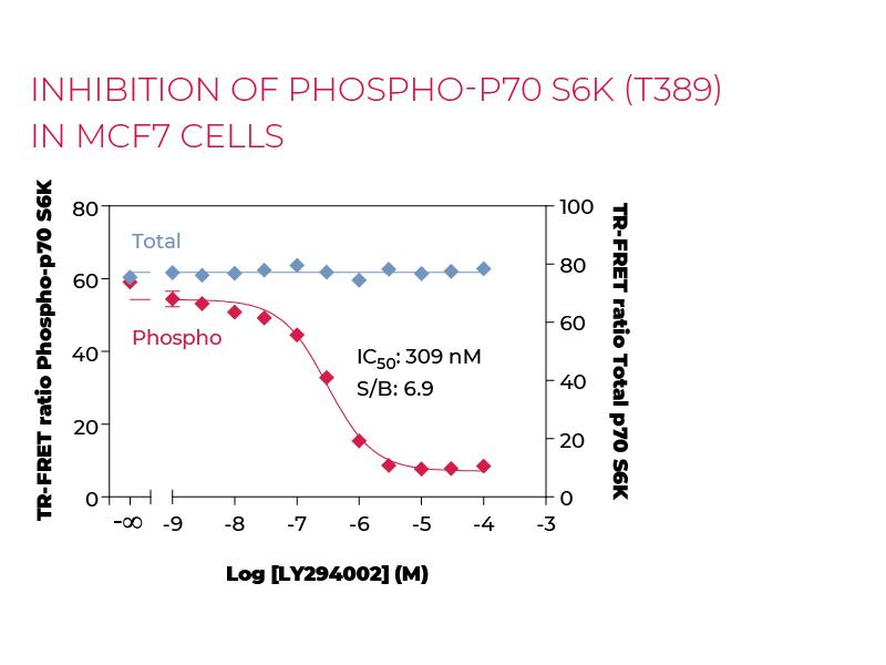 Stimulation of Phospho-P70 S6K (T389) in MCF7 cells