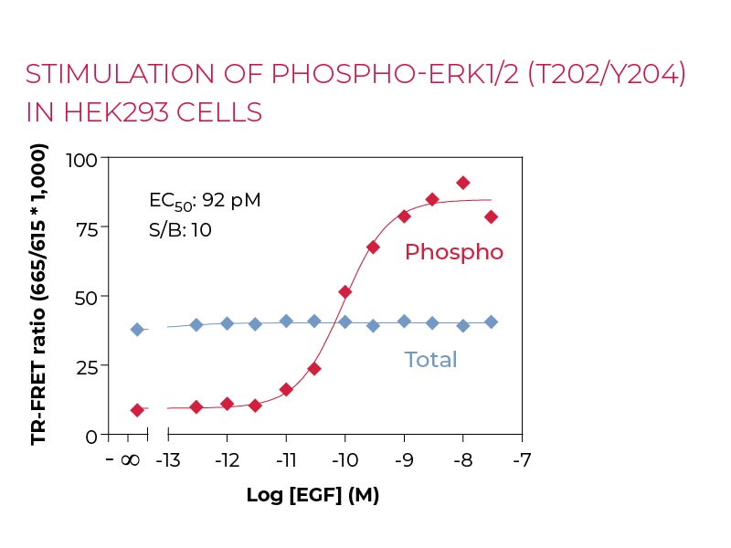 Stimulation of PHOSPHO-ERK1-2(T202-Y204) in HEK293 cells