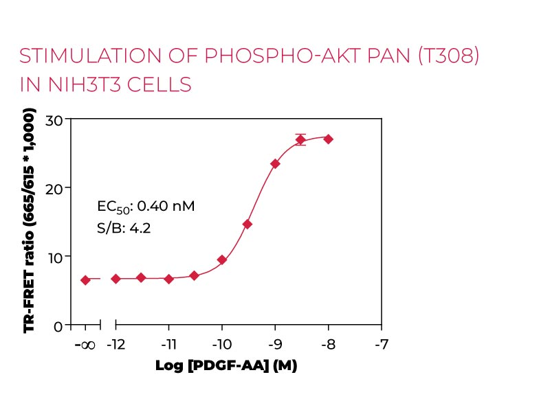 Stimulation of Phospho-AKT pan (T308) in NIH3T3 cells