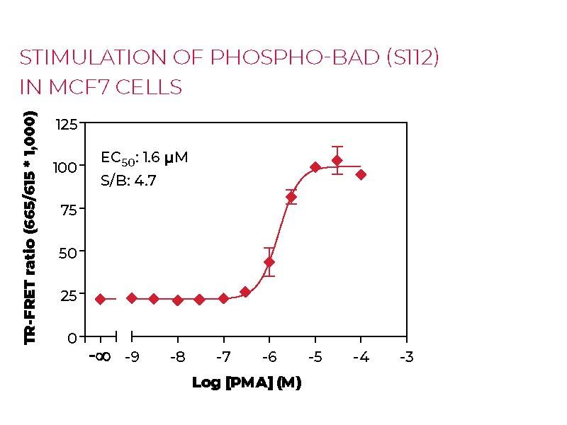 Stimulation of Phospho-BAD (S112) in MCF7 cells