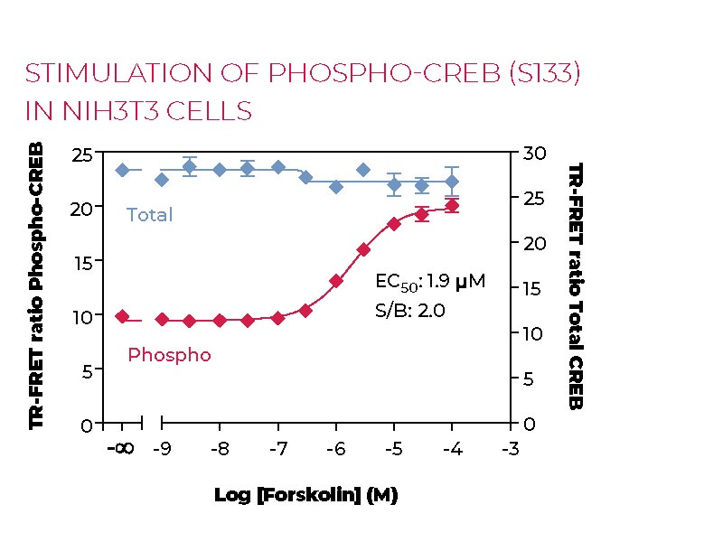 Stimulation of Phospho-CREB (S133) in NIH3T3 cells