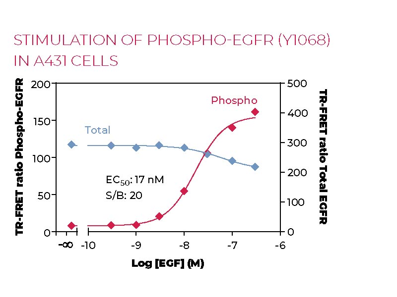 Stimulation of Phospho-EGFR (Y1068) in A431 cells