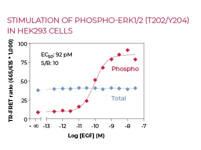 Stimulation of Phospho-ERK1-2 (T202-Y204) in HEK293 cells
