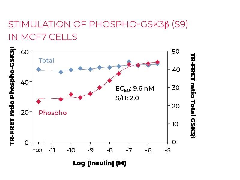 Stimulation of Phospho-GSK3β (S9) in MCF7 cells