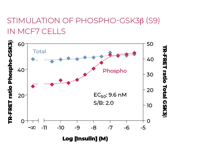 Stimulation of Phospho-GSK3β (S9) in MCF7 cells