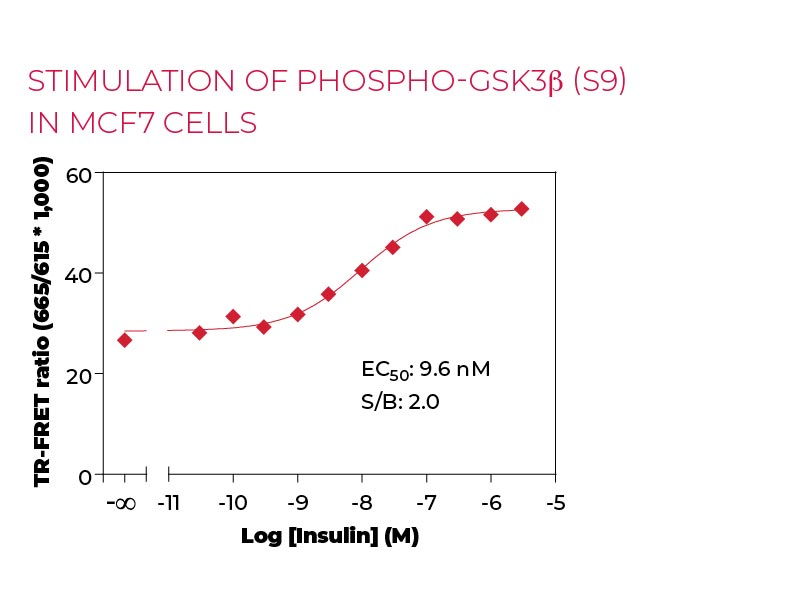 Stimulation of Phospho-GSK3b (S9) in MCF7 cells