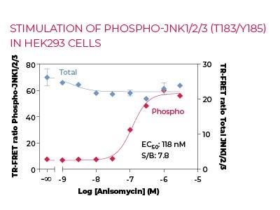 Stimulation of Phospho-JNK1-2-3 (T183-Y185) in HEK293 cells