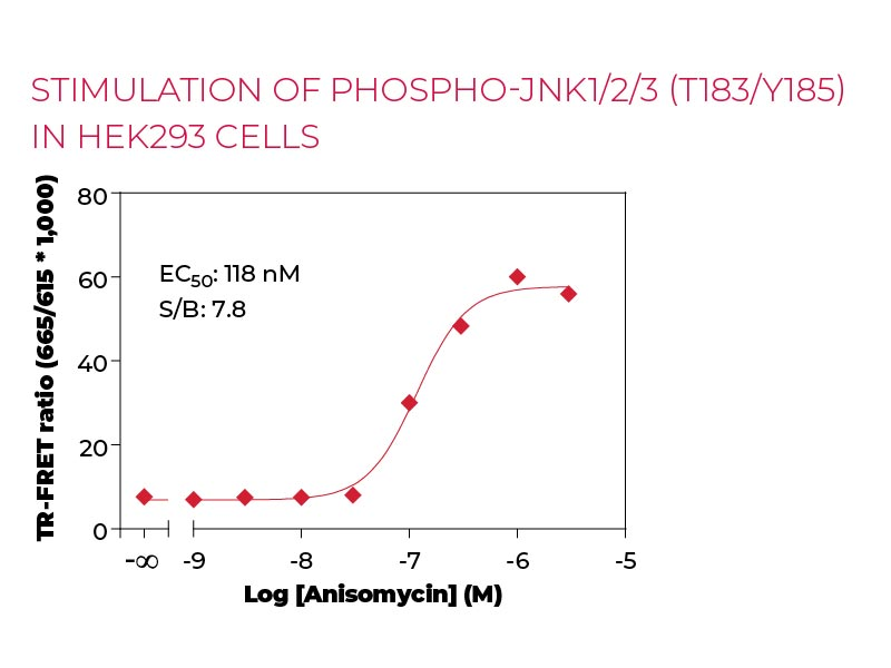 Stimulation of Phospho-JNK1-2-3 (T183-Y185) in HEK293 cells