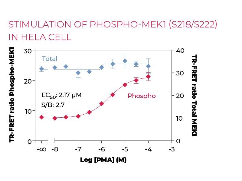 Stimulation of Phospho-MEK1 (S218-S222) in Hela cells