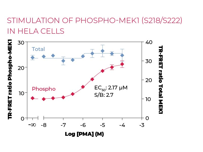 Stimulation of Phospho-MEK1 (S218-S222) in HeLa cells