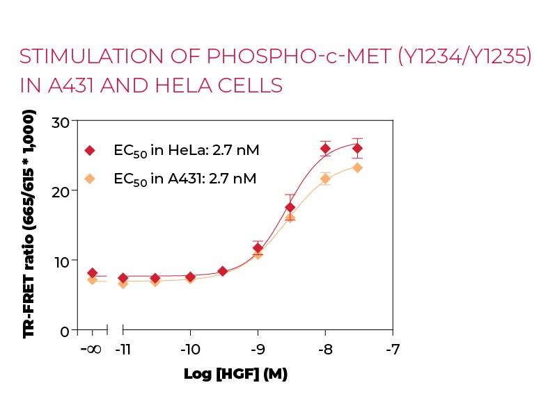Stimulation of Phospho-c-Met (Y1234-Y1235) in A431 and Hela cells