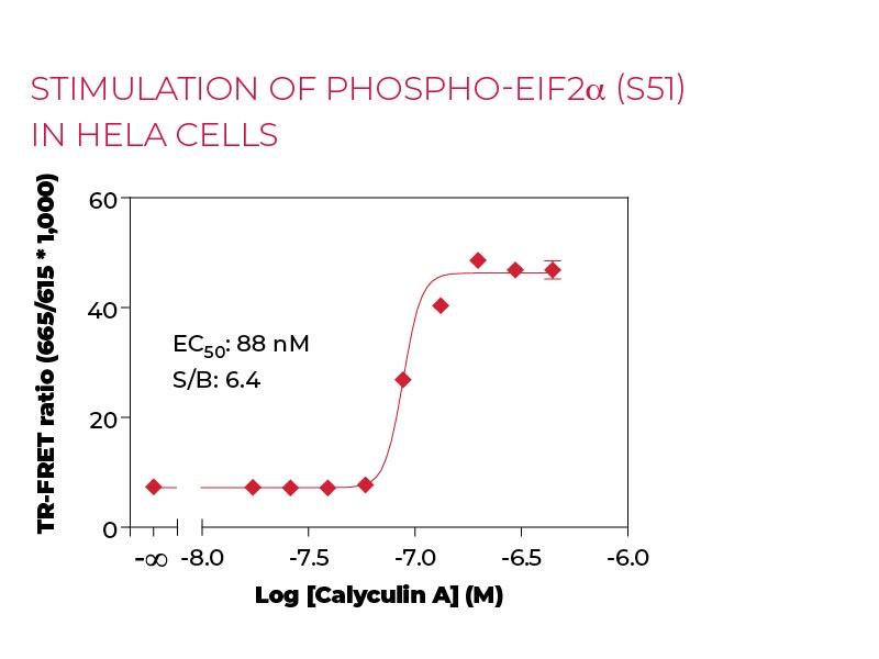 Stimulation of Phospho-eIF2α (S51) in Hela cells