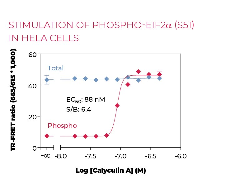 Stimulation of Phospho-eIF2a (S51)in Hela cells