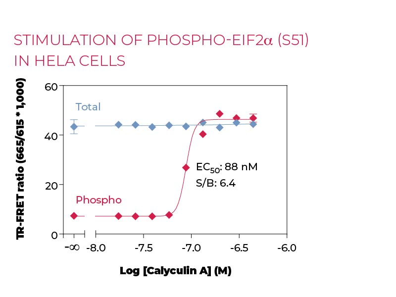 Stimulation of Phospho-eIF2a (S51) in Hela cells
