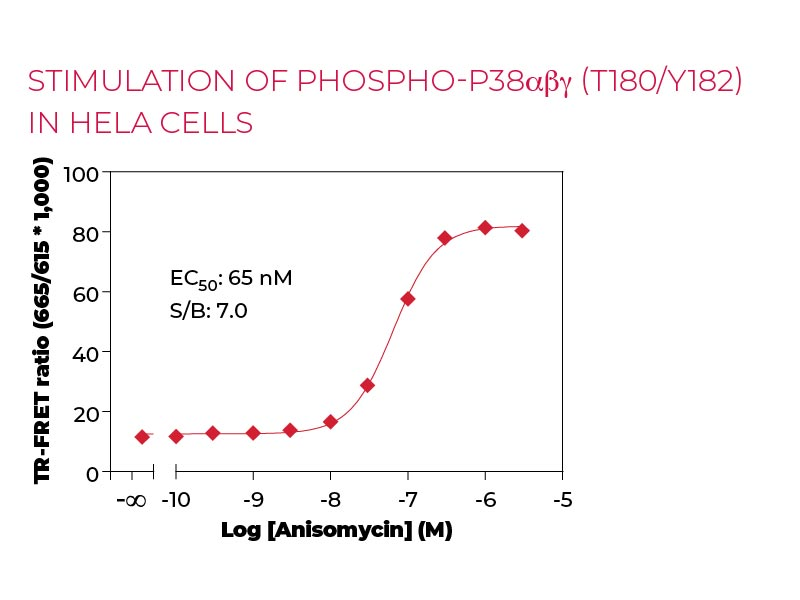 Stimulation of Phospho-p38αβγ (T180-Y182) in HeLa cells