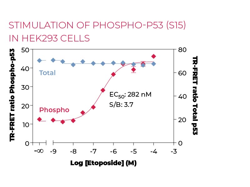 Stimulation of Phospho-P53 (S15) in HEK293 cells