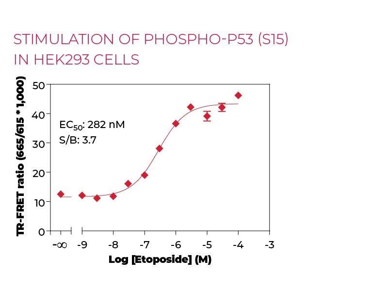 Stimulation of Phospho-P53 (S15) in HEK293 cells