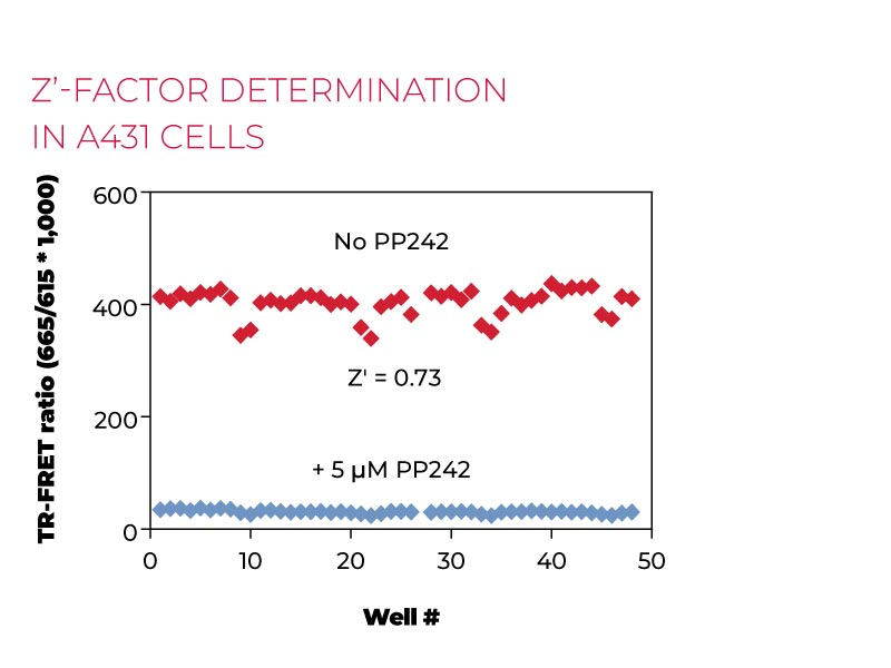 Z-factor determination in A431 cells