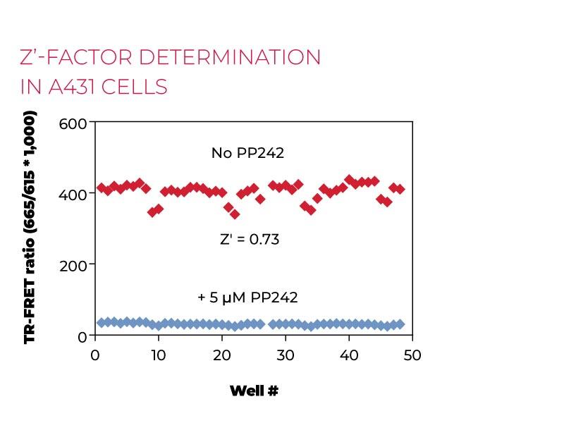 Z-factor determination in A431 cells